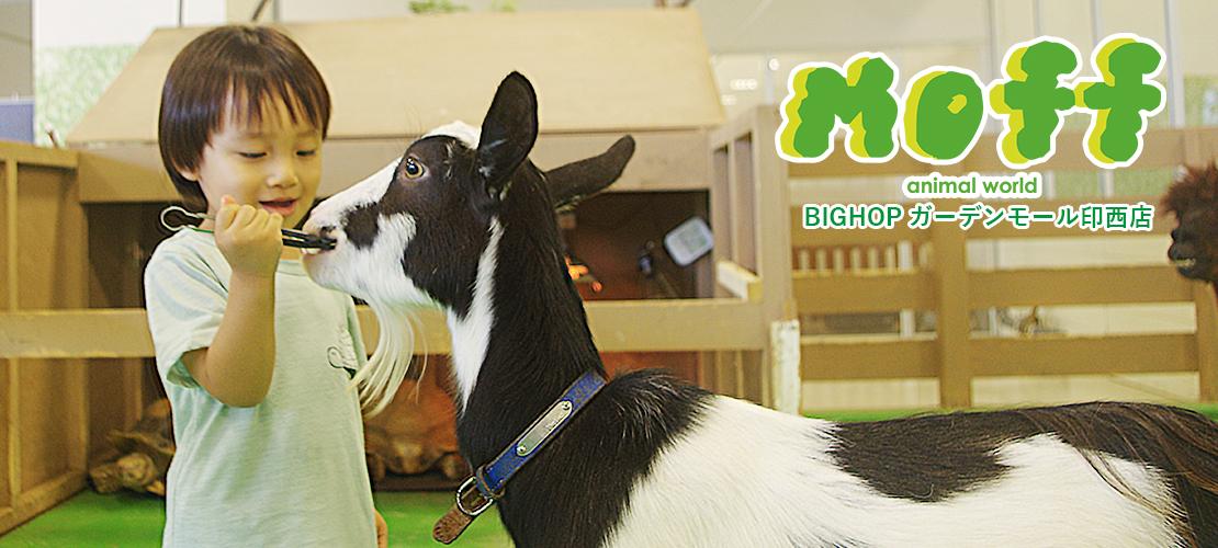 Moff animal world BIGHOPガーデンモール印西店